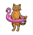 cat in rubber ring color sketch engraving vector image vector image