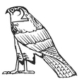 falcon ancient Egyptian symbol vector image