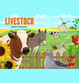 farm animals cattle and poultry vector image vector image