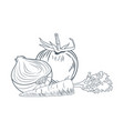 tomato onion and carrot hand draw vector image vector image