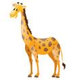 giraffe with long neck vector image vector image