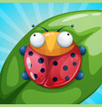 insect ladybug beetle - cartoon vector image