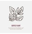 line icon of coffee tree Coffee plant vector image