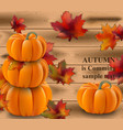 pumpkin realistic on wood vector image vector image