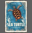 sea turtle in ocean coral reefs vector image