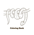 Boa cartoon coloring book vector image vector image