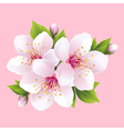 Branch of pink blossoming sakura japanese cherry vector image vector image