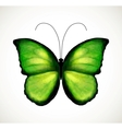 Bright green butterfly vector image