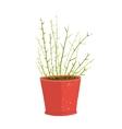 delicate green indoor leafy plant in pot vector image vector image