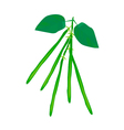 Delicious Fresh Green Beans on A Plant vector image