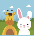 cute rabbit and giraffe in the field landscape vector image
