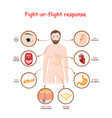fight-or-flight response vector image vector image