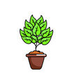 isolated plant design vector image