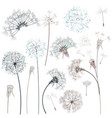 set hand drawn dandelions for design vector image