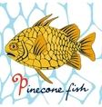 Pinecone fish vector image