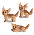 set cartoon animated yorkshire terrier puppy vector image vector image