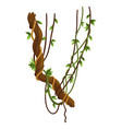 twisted wild lianas branches banner jungle vine vector image vector image